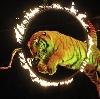 Цирки в Красном