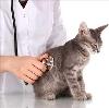 Ветеринарные клиники в Красном